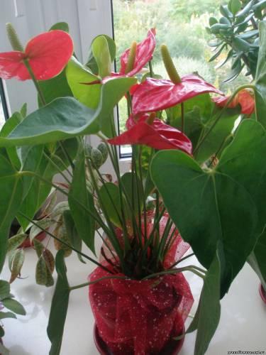 Бисероплетение кактус с розовыми