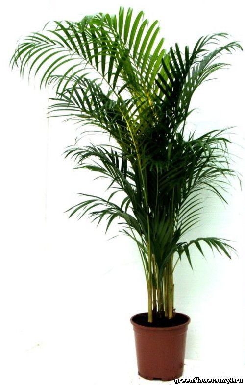 Каталог комнатных растений с фото и названиями - Растениевод