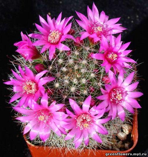 Комнатные растения в картинках фото
