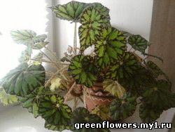 С фото комнатные растения с фото