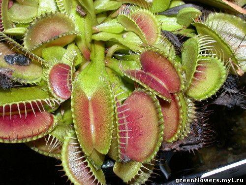 Категория растения хищники добавил