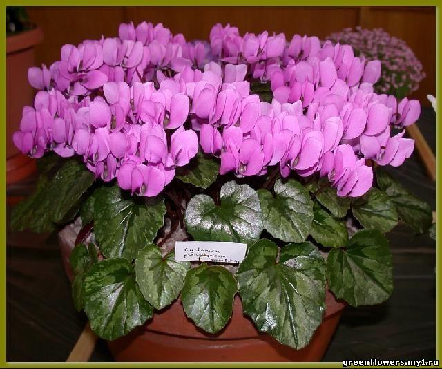 цветы самые красивые фото: