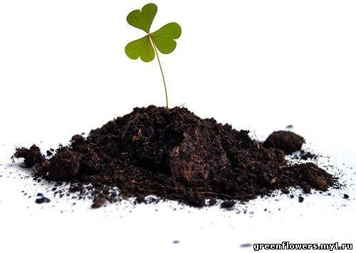 Почва для цветов и комнатных растений