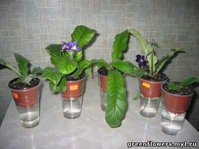 Комнатные цветы с фото комнатные