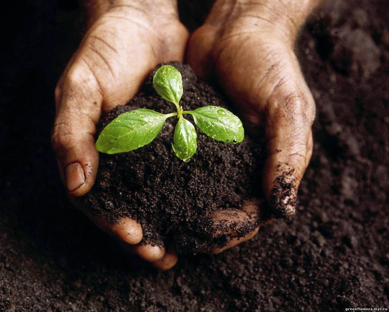 Формирования внешнего вида растения